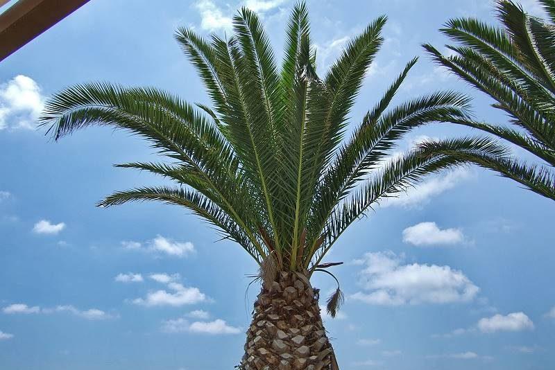 Palme auf Zypern - Auswandern und Leben auf Zypern