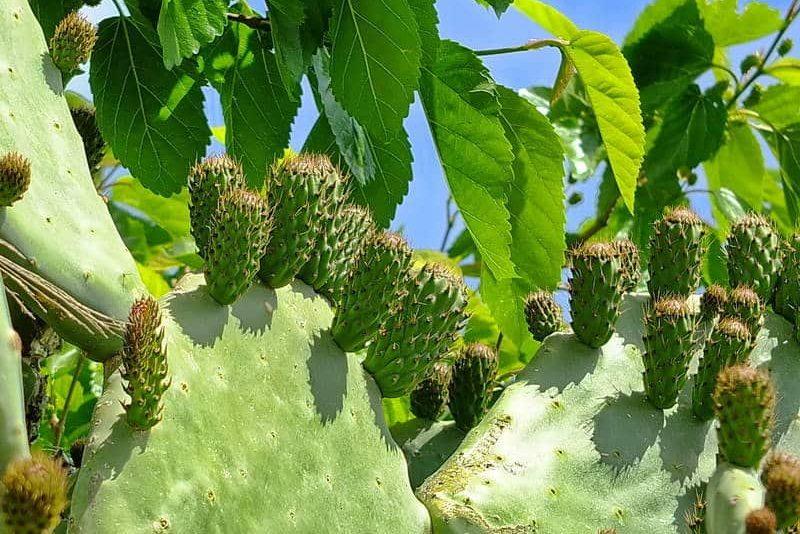 Kaktus-Nachkommen - Auswandern und Leben auf Zypern