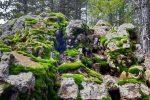 Grüne Felsen im Troodos-Gebirge - Auswandern und Leben auf Zypern