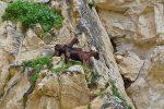 Kletterkünstler in der Avakas-Schlucht - Auswandern und Leben auf Zypern