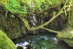 Das Bad der Aphrodite - Auswandern und Leben auf Zypern