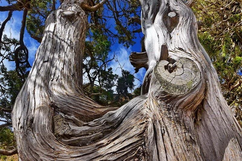 Baum im Troodos-Gebirge - Auswandern und Leben auf Zypern