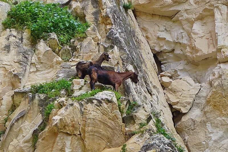 Bewohner der Bergwelt - Auswandern und Leben auf Zypern