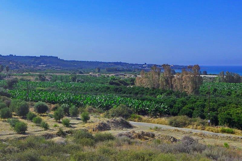 Obstplantagen Nähe Coral Bay - Auswandern und Leben auf Zypern