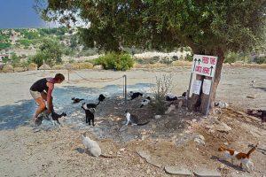 Auswandern nach Zypern - Agios Neofytos Cats-Park
