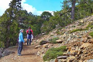 Zypern Sehenswürdigkeiten - Troodos - Artemis Nature Trail