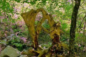Auswandern nach Zypern - Eine Skulptur mitten im Wald?