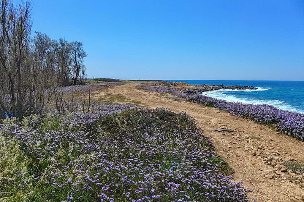 BEACHFRONT-GRUNDSTÜCK IN SEA CAVES ZUM KAUF – PFPL109