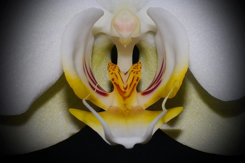 Meine Makroaufnahme einer Orchideenblüte - Auswandern und Leben auf Zypern